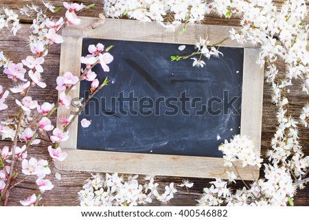 fresh cherry twigs with fresh pink  blooming apple  flowers  on blak board background with copy space - stock photo