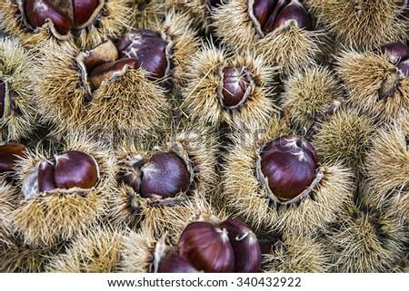 fresh chestnuts - stock photo