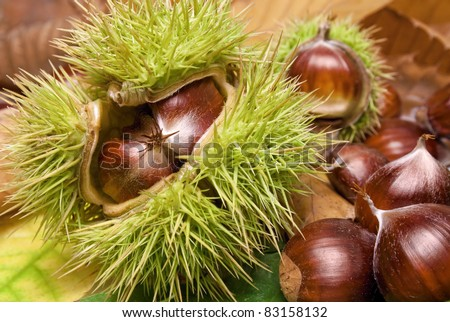 Fresh chestnuts with open husk on fallen autumn leaves - stock photo