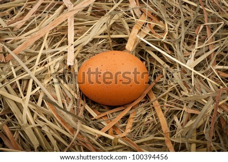 Fresh chicken egg in straw nest