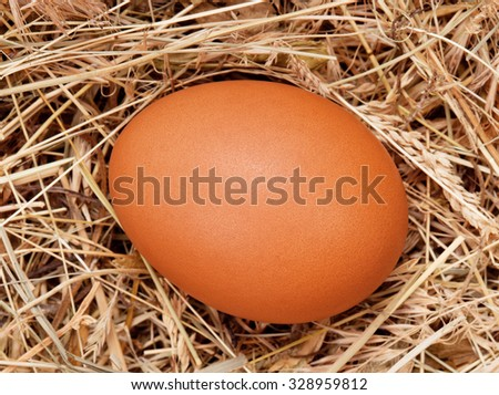 Fresh chicken egg in the natural nest of hay
