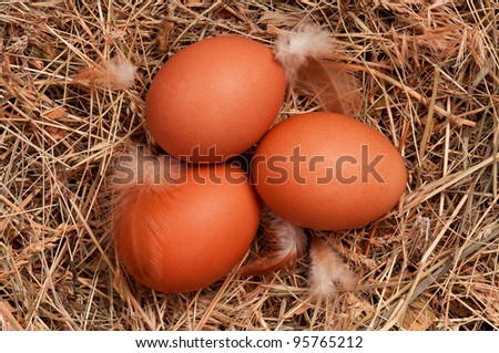 Fresh chicken eggs in the natural nest of hay - stock photo