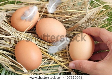 Fresh chicken eggs with Farmers in the farm