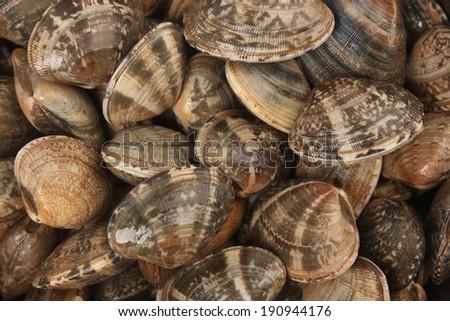 fresh clams  - stock photo
