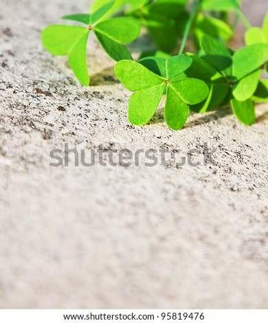 Fresh clover leaves over stone, green spring floral border, lucky shamrock, St.Patrick's day holiday symbol, abstract natural background - stock photo