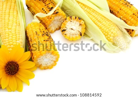 Fresh cobs with green leaves and grilled corn on a white background.