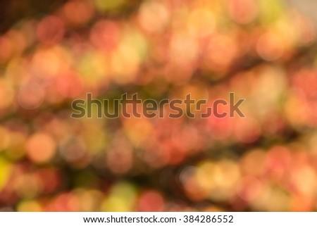 Fresh coffee beans texture blur and bokeh - stock photo