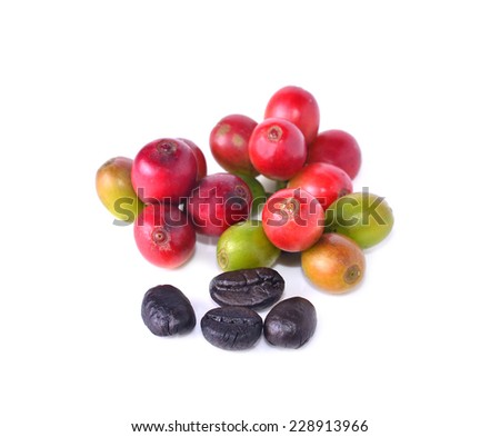 Fresh coffee beans with white background - stock photo