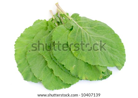 Fresh Collard Greens leaves on white background . - stock photo