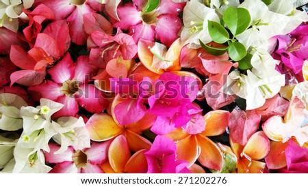 fresh colorful flowers frangipani plumeria and bougainvillea on water - stock photo