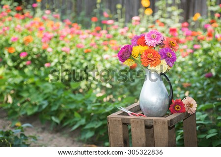 Fresh, Colorful Zinnia Flower Bouquet in a Tin Pitcher Vase on a Wood Crate against Floral Garden Background with room or space for copy, text, your words.  Horizontal outside in Portland Oregon, USA - stock photo