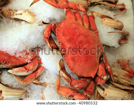 fresh cooked dungeness crab on ice for sale in a fish market - stock photo