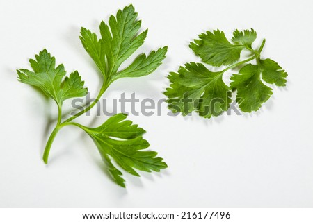 Fresh coriander and parsley on white background - stock photo