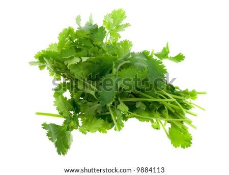 fresh coriander (cilantro) herb isolated on a white background - stock photo