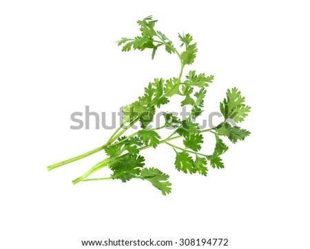 fresh coriander isolate on white - stock photo