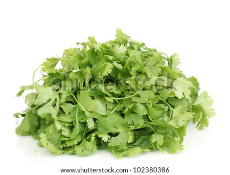 fresh coriander or cilantro isolated on white - stock photo