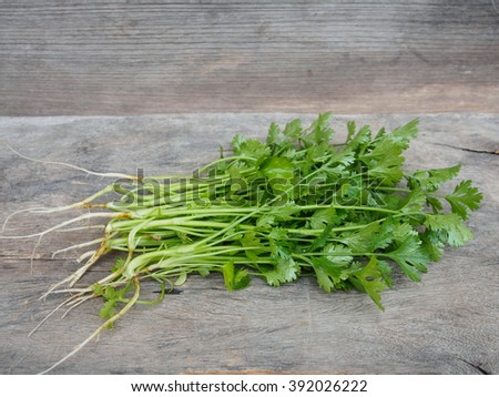Fresh coriander vegetable on wooden table with copy space