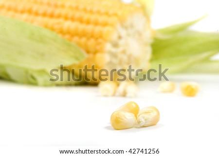 fresh corn close up  macro  isolated on white background - stock photo