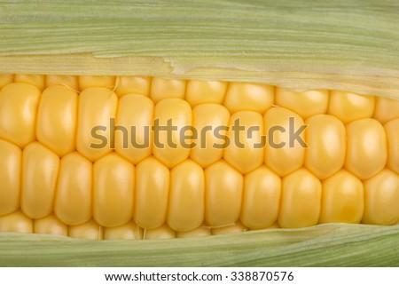 Fresh corn cob closeup, maize macro horizontal top view - stock photo