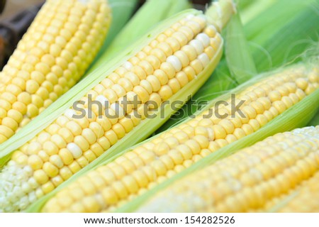 Fresh corn cobs, close-up - stock photo