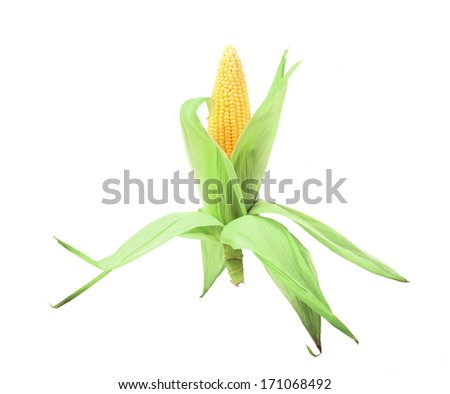 Fresh corn cop in form of rocket. Isolated on a white background. - stock photo