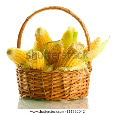 fresh corn in basket, isolated on white - stock photo