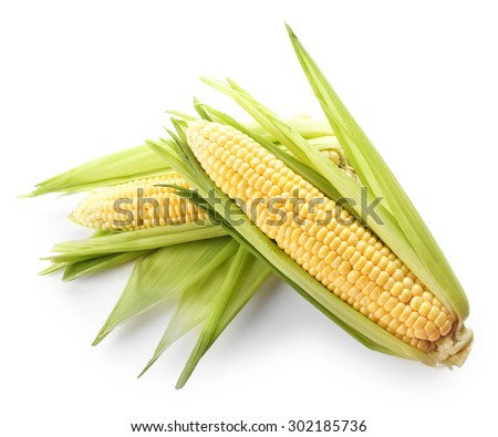 Fresh corn on cobs isolated on white - stock photo