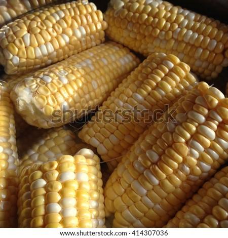 Fresh corn on the cob - stock photo