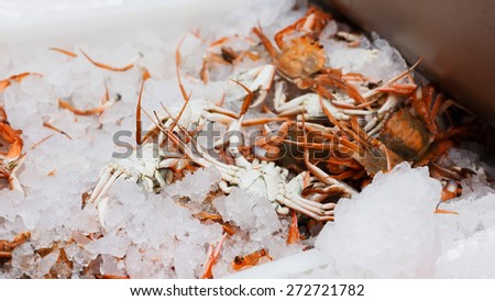 Fresh crabs packed in the ice - stock photo