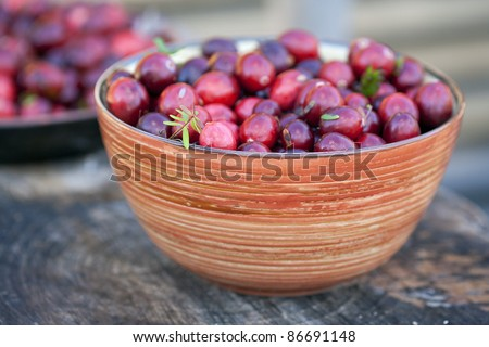 Fresh cranberries in bowl. Just after picking up in a swamp