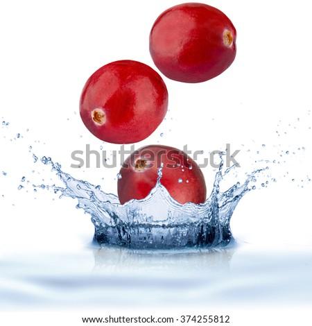 Fresh Cranberry Fruit With Water Splash - stock photo