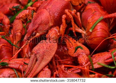 Fresh crayfish - stock photo