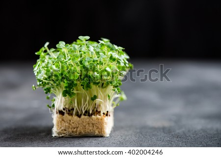 Fresh Cress Salad Macro Shot Selective Focus, Shallow DOF - stock photo