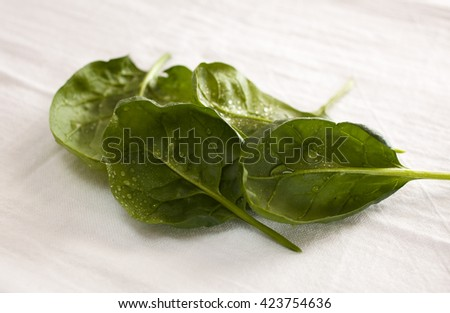 Fresh crisp spinach leafs.  Vibrant and full of natural texture