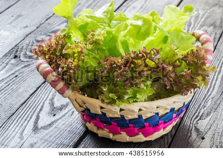Fresh crispy lettuce and Lollo Rossa in the basket. The source of vitamins and minerals, detox, diet, health or vegetarian food concept - stock photo