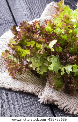 Fresh crispy lettuce and Lollo Rossa on sacking. The source of vitamins and minerals, detox, diet, health or vegetarian food concept. Vertical - stock photo