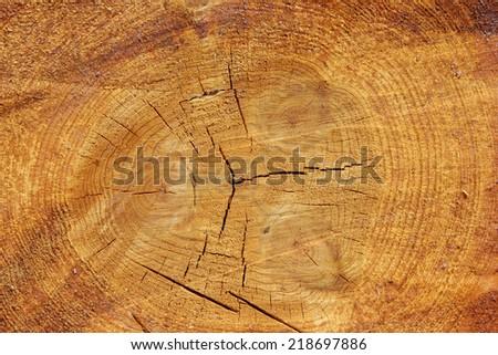 fresh cut wood log close up - stock photo
