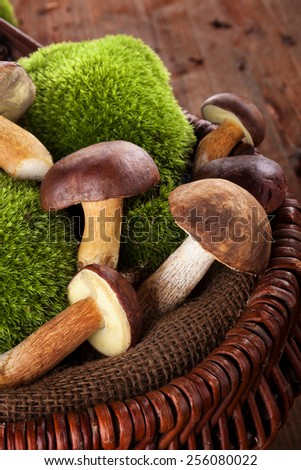 Fresh delicious mushrooms with moss in wooden basket on brown wooden background.Seasonal mushroom picking. - stock photo