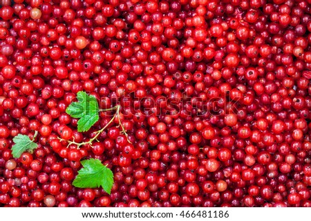 Fresh delicious organic red currant as a background, top view