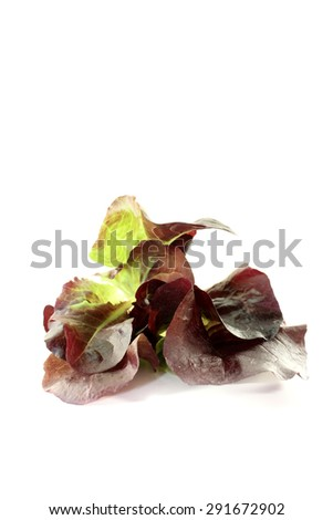 fresh delicious red lettuce on a bright background - stock photo