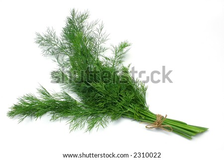 Fresh Dill (herb) tied in a bunch, isolated on white