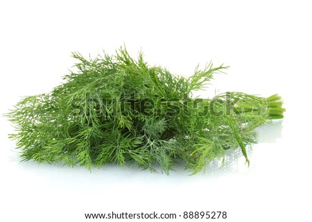 fresh dill isolated on white - stock photo