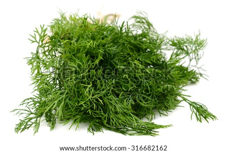 Fresh Dill isolated on white background - stock photo