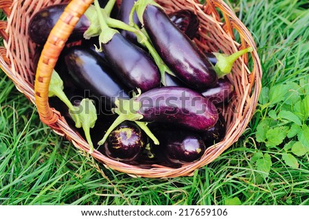 Fresh eggplant in basket on grass - stock photo