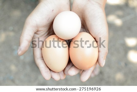 Fresh eggs from the coop to keep out of hand - stock photo