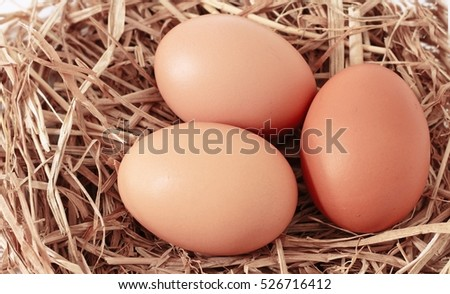 fresh eggs on hay