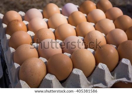 Fresh farm egg. Chicken Egg - stock photo