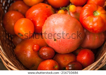 Fresh farm tomatoes from the garden in a basket - stock photo