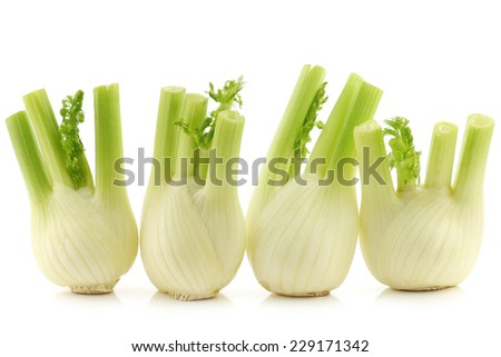 fresh fennel on a white background - stock photo