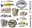 Fresh fish and fish dishes isolated on white - stock photo